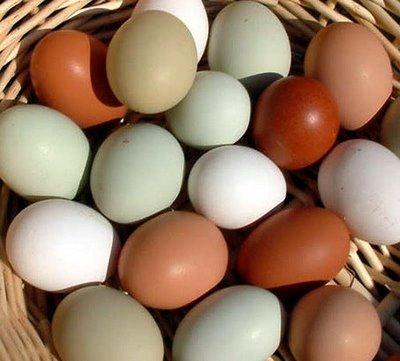 telur campur